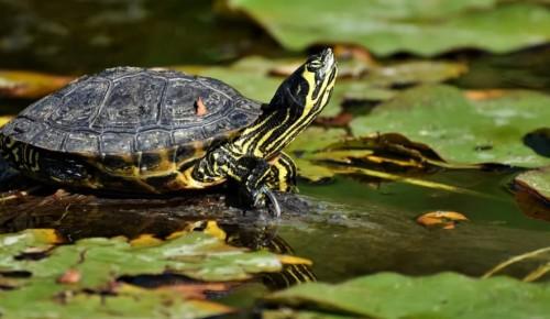 """Экоцентр """"Битцевский лес"""" организует мероприятия к Всемирному дню черепахи"""