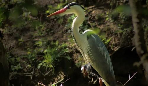 Более 50 видов птиц обнаружили в Битцевском лесу