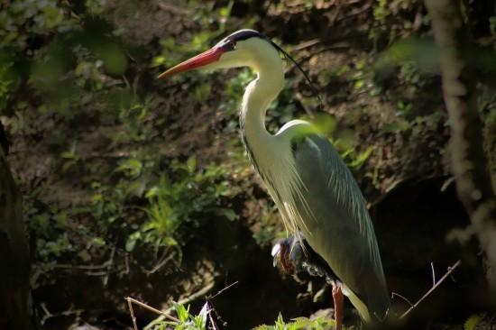 В Битцевском лесу жители Ясенева смогут встретить более 50 видов птиц