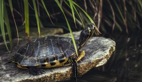 В эконцентрах Битцевского леса к Всемирному дню черепахи пройдут экскурсии и квесты