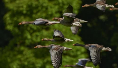 Более полусотни видов птиц зафиксировали экологи «Мосприроды» в Битцевском лесу