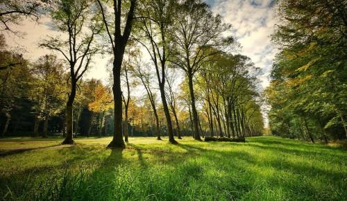 "Экоцентр ""Битцевский лес"" приготовил активности для жителей Ясенева"
