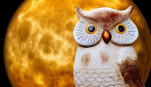 Барельеф с изображение совы сделают в библиотеке № 185