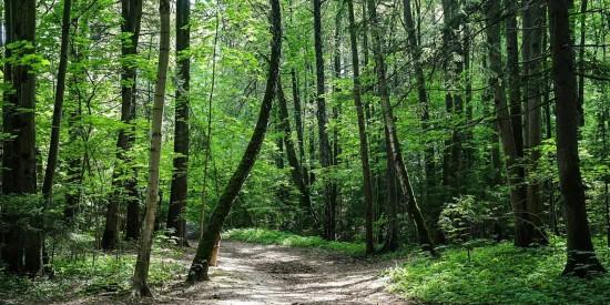 В Битцевском лесу пройдут мероприятия в честь Дня России