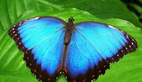 """В экоцентре """"Воробьёвы горы"""" с 15 по 18 июня проведут активности в честь Всемирного дня бабочки"""
