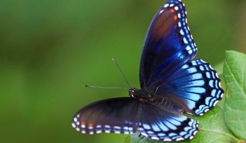 """В экоцентре """"Лесная сказка"""" в Битцевском парке пройдут экологические экскурсии ко Дню бабочки"""