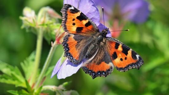 Жителей Северного Бутово с 15 по 18 июня приглашают на экомероприятия в честь Дня бабочки