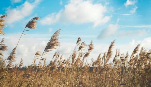 """В экоцентре """"Воробьёвы горы"""" рассказали о праздновании Всемирного дня ветра"""