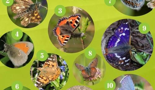 Жители Северного Бутова могут проверить свои знания о бабочках