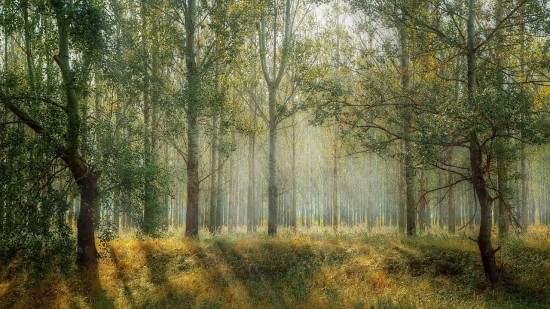 Экоцентр «Битцевский лес» знакомит жителей Ясенева с обществом охраны природы