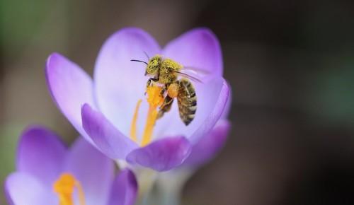 Как защититься летом от укусов насекомых.  Дерматолог дает советы жителям ЮЗАО