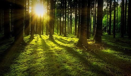 Жителям Теплого стана предложили поучаствовать в викторине о лесе