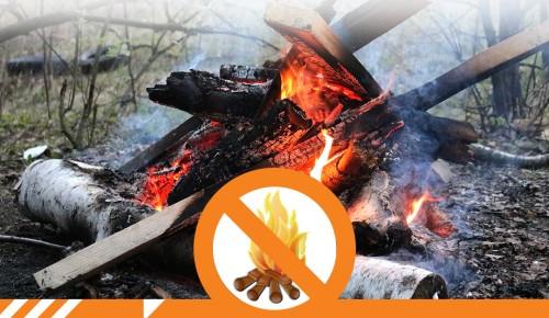 Пожарная безопасность в лесах и лесопарковых зонах