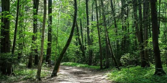 Все мероприятия Битцевского леса продолжаются в онлайн-формат