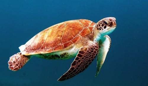 Экоцентр «Битцевский лес» рассказал жителям Ясенева о Всемирном дне черепахи