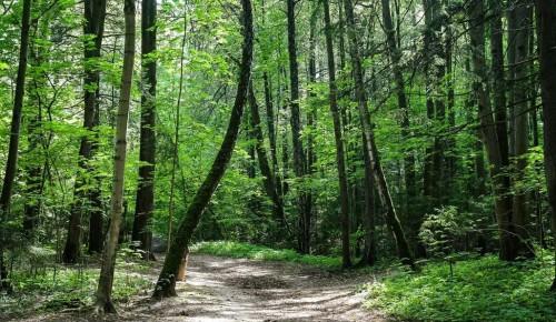 Экоцентр «Битцевский лес» проводит мероприятия в онлайн-формате