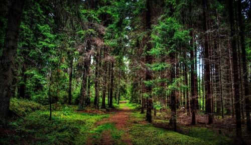 Специалисты Мосприроды рассказали о самых живописных природных территориях ЮЗАО