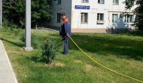 Коммунальщики ухаживают за клумбами и цветниками в Черемушках