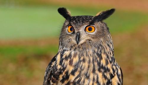 Жители Северного Бутова могут принять участие в игре Мосприроды о птицах
