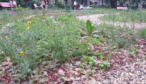В Академическом районе  подрос мини-сад, высаженный жителями