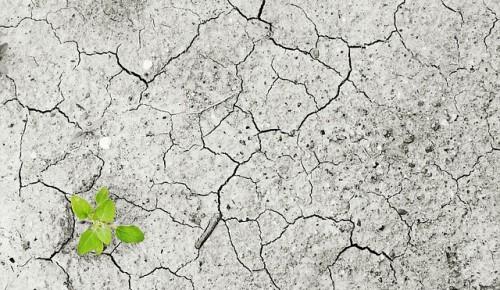 Жителей Академического района предупредили о сильнейшей засухе в июле