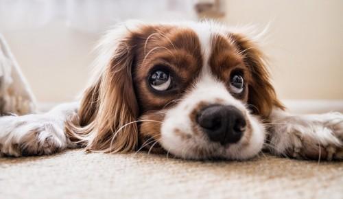 """Экоцентр """"Битцевский лес"""" опубликовал головоломку к Международному дню собак"""