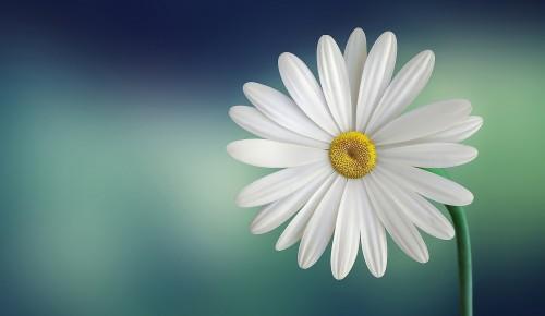 """Дирекция """"Теплый Стан"""" и """"Тропарево"""" опубликовала кроссворд к Международному Дню цветка"""