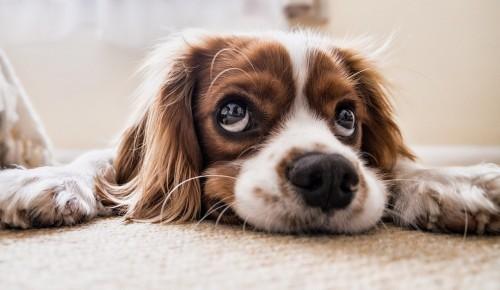 В библиотеке № 191 подготовили литературную программу к Международному дню собак