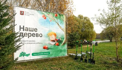 На участие в проекте «Наше дерево» подали свыше 8 тыс. заявок