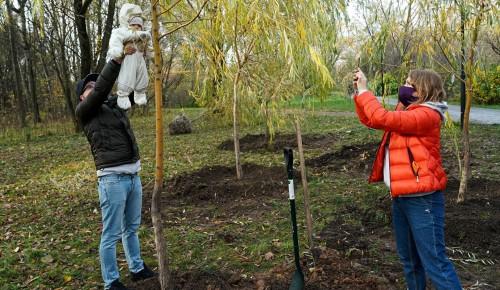 Свыше 8 тыс. заявок подали москвичей на участие в проекте «Наше дерево»