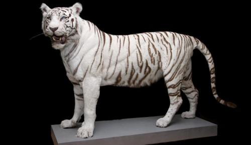 Дарвиновский музей показал необычных зверей на онлайн-выставке