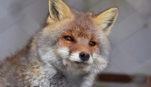 Жителям Конькова расскажут о диких животных, обитающих в столице