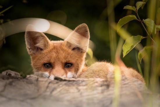 Департамент природопользования Москвы рассказал о животных, обитающих в городе
