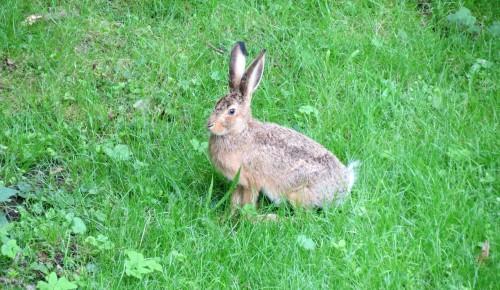 В Мосприроде рассказали о самочувствии животных на природных территориях в аномальную жару