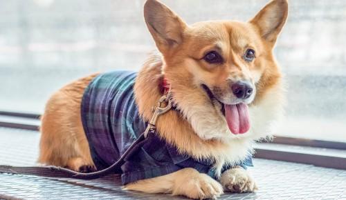Александр Семенников: Чипирование - лучшее решение для поиска домашних животных