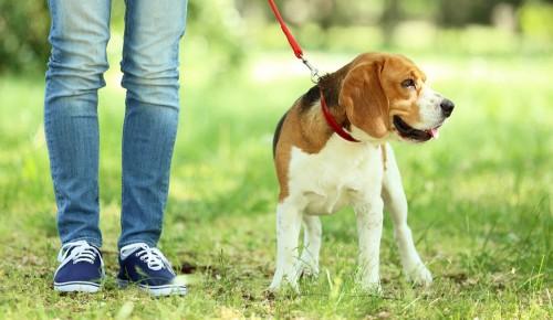 В Черемушках оборудованы четыре площадки для выгула собак