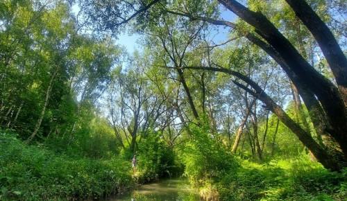 В долине реки Котловки нашли растения, занесенные в Красную книгу