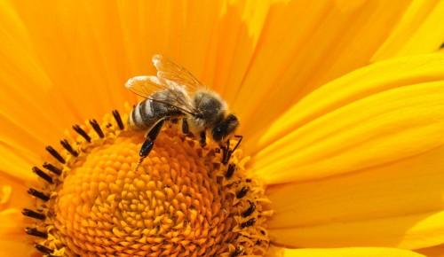 Мосприрода опубликовала новый выпуск видеоподкаста «Пчелиная семья»