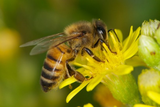 Мосприрода опубликовала видеоподкаст об устройстве семьи пчёл