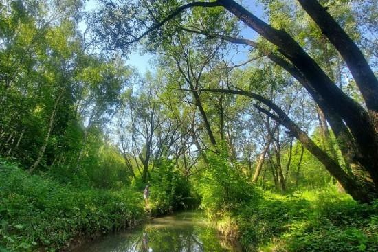 В долине реки Котловки нашли краснокнижные растения