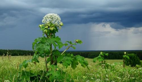 Жители Теплого Стана могут сообщить Мосприроде о сорных и вредных растениях на природных территориях