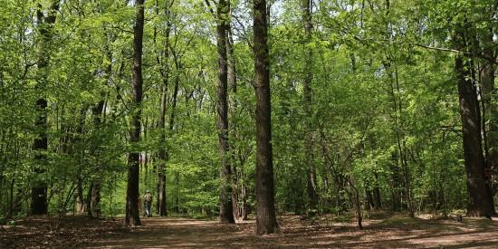 В Воронцовском парке можно прогуляться по Дубраве, где растут вековые деревья