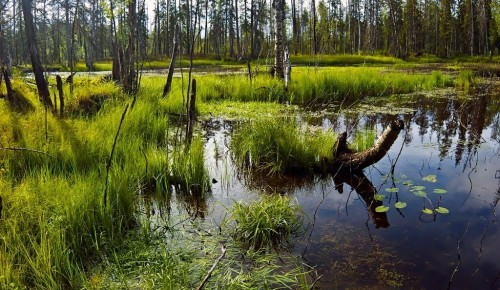 """Дирекция """"Теплый Стан"""" и """"Тропарево"""" опубликовала онлайн-занятие о болотных растениях"""