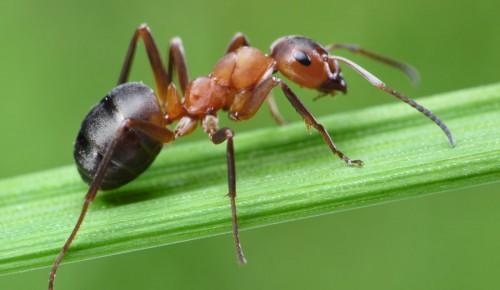 """Дирекция """"Теплый Стан"""" и """"Тропарево"""" опубликовала онлайн-лекцию о муравьях"""