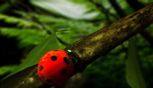Экоцентр «Битцевский лес» Ясенева представляет викторину «Жужжалки»