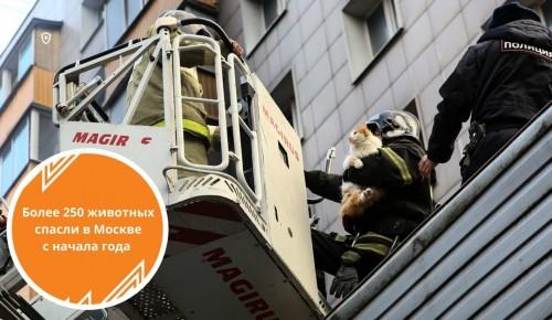 Более 250 животных спасено сотрудниками МЧС в Москве с начала года