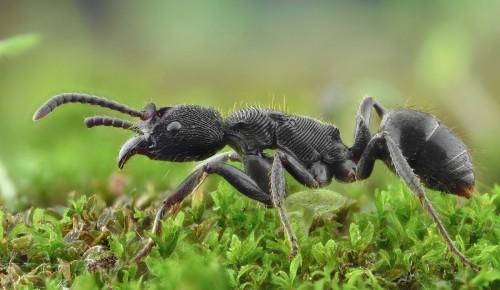 """Дирекция """"Теплый Стан"""" и """"Тропарево"""" опубликовала онлайн-занятие, посвященное насекомым"""
