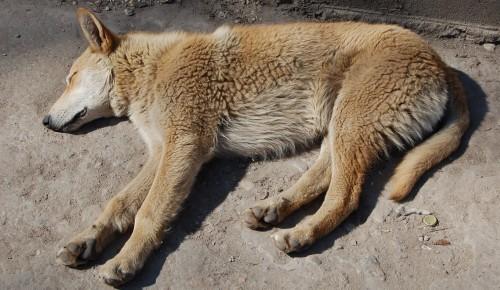 Мосприрода приглашает в онлайн-формате обсудить проблемы бездомных животных