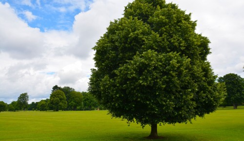 """Дирекция природных территорий """"Теплый Стан"""" и """"Тропарево"""" подготовила лекцию о полезных свойствах деревьев"""