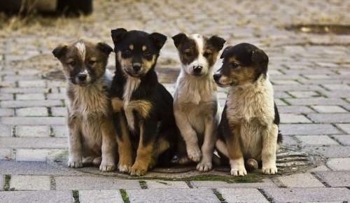 Библиотека №173 опубликовала подборку книг ко Всемирному дню бездомных животных